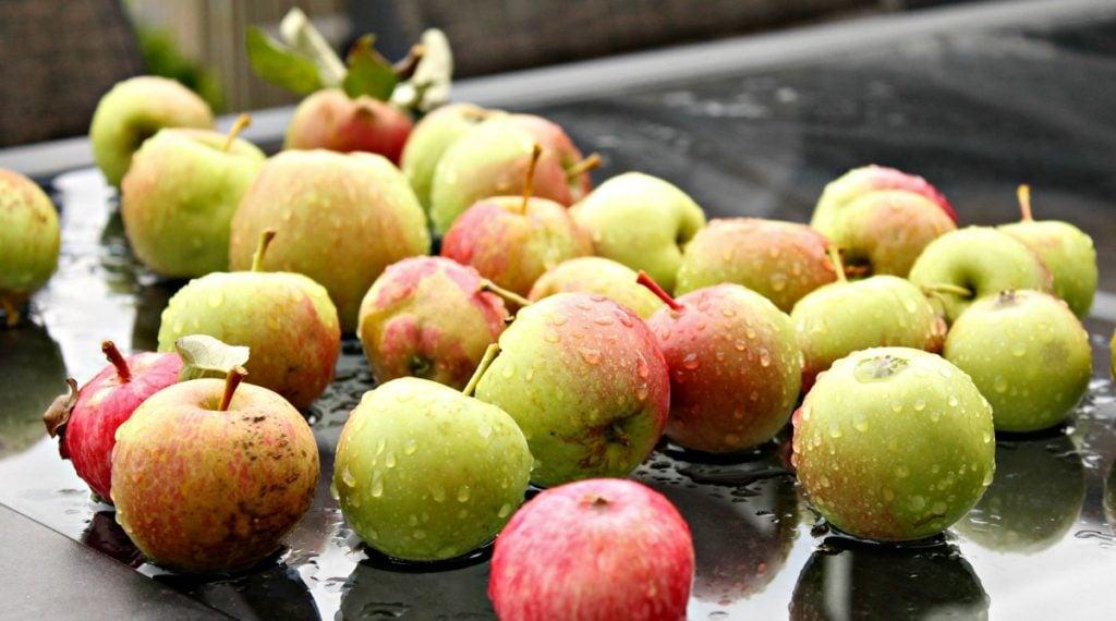 Home grown fresh apples