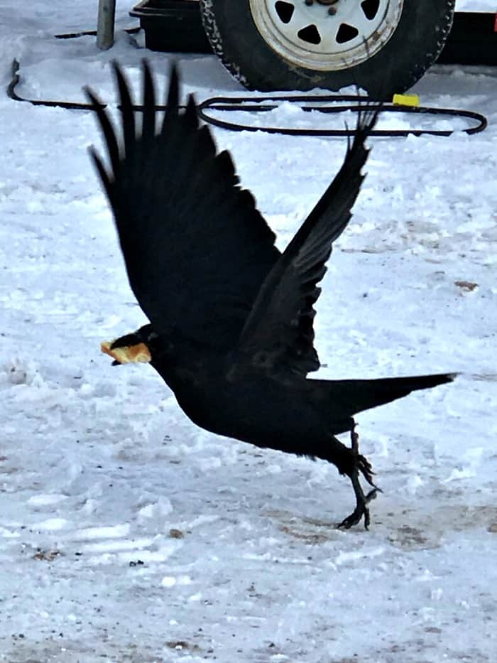 raven printable,Poe decorations,, Halloween Art