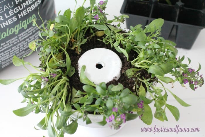 Flowers being planted in a terra cotta clay pot craft idea.
