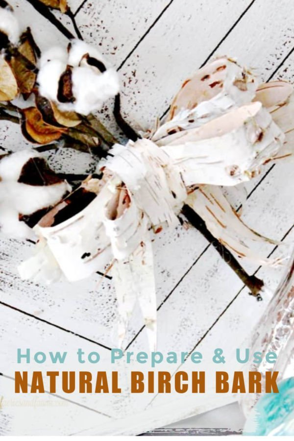 How to harvest birch bark and use it in fall crafts