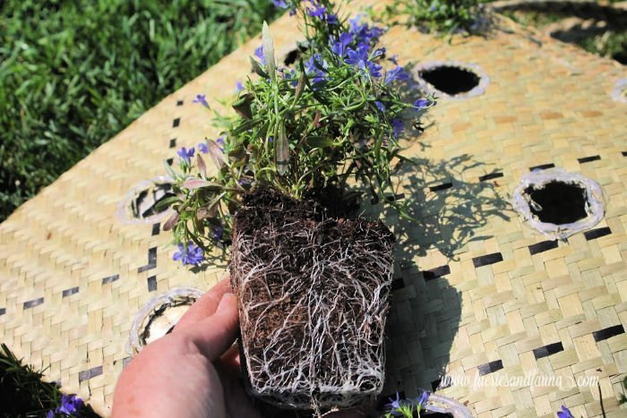 Planting small annual plants and flowers in a DIY vertical planter.