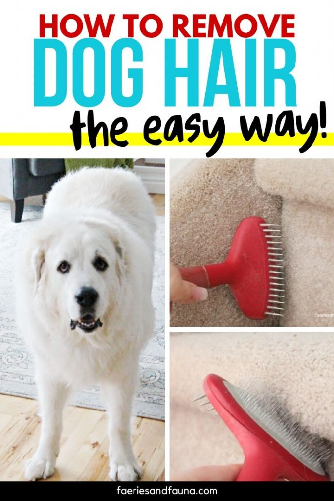 Cleaning hack for removing dog hair from carpet.