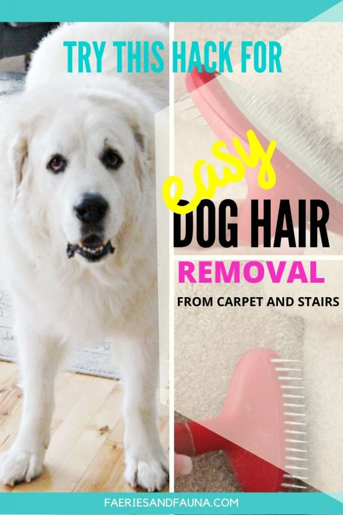 An easy way to remove dog hair and a large white dog with lots of hair