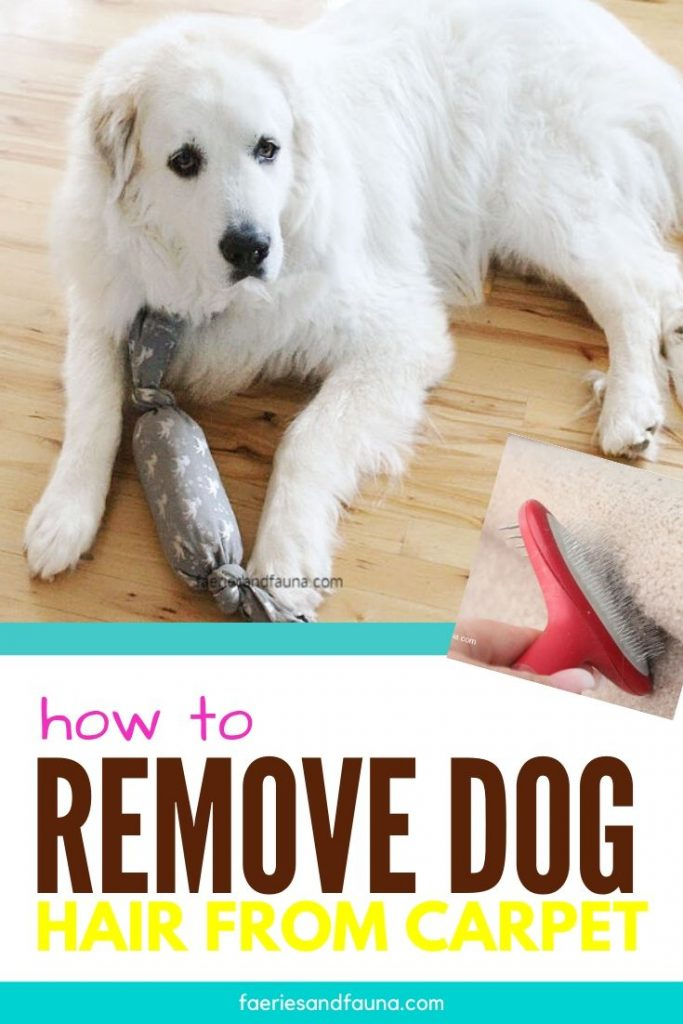 An easy cleaning hack for removing pet hair from carpet and stairs.