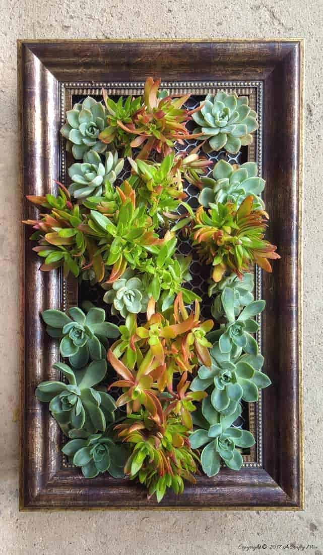 How to update an old picture frame craft into a vertical succulent garden.