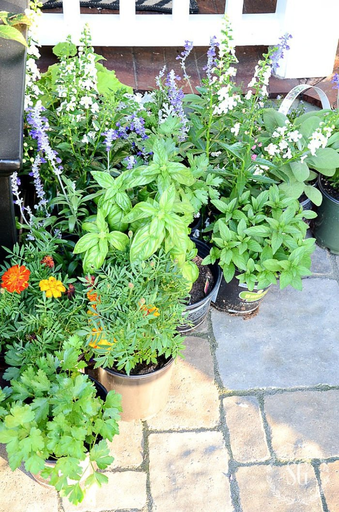 Pretty herb garden in pots, a growing guide for herbs.